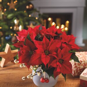 poinsettia-red-christmas-table-1569782476